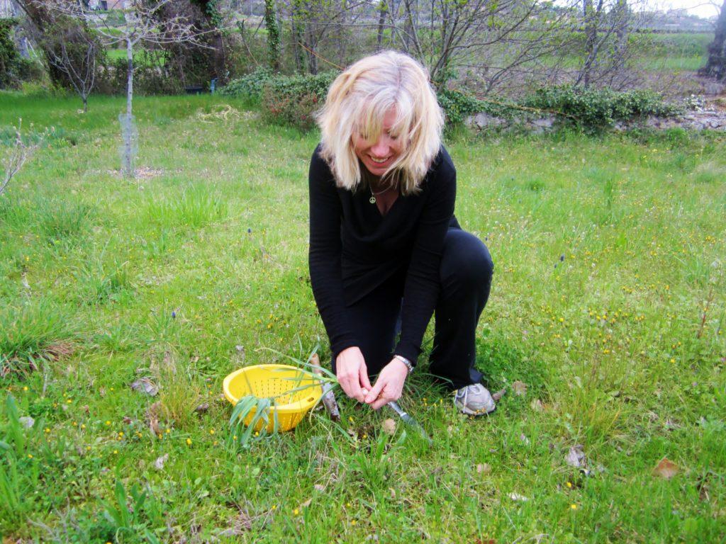 picking wild leeks
