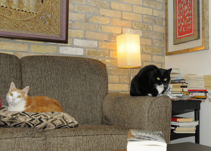 Ron Schafrick reading space: couch with cats